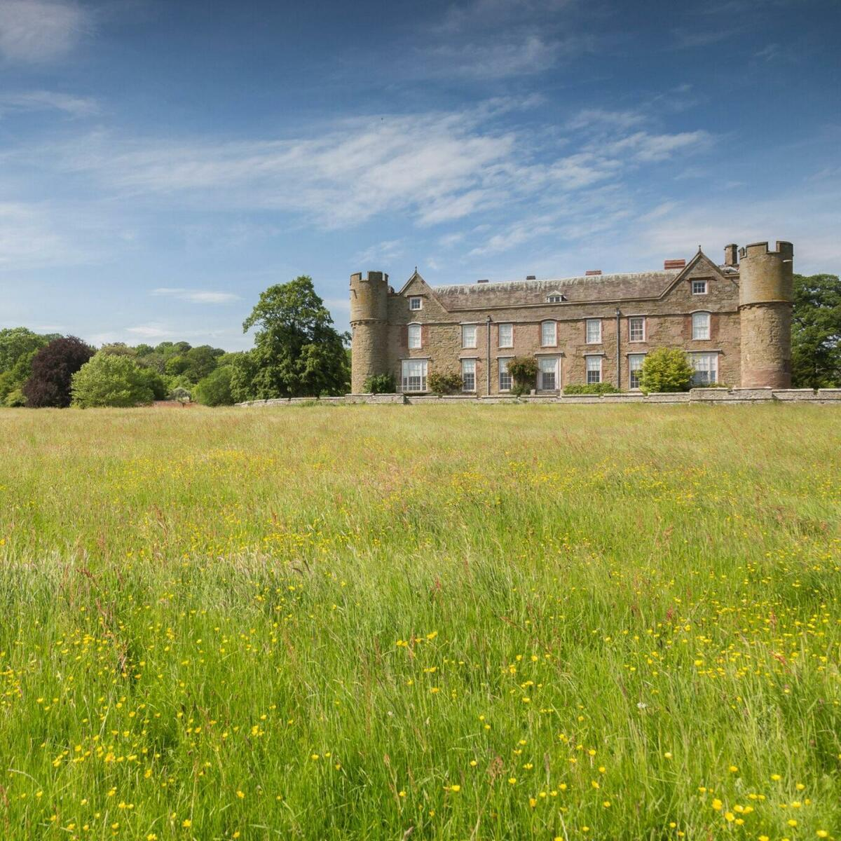 Buttercup meadow leading up to Croft castle