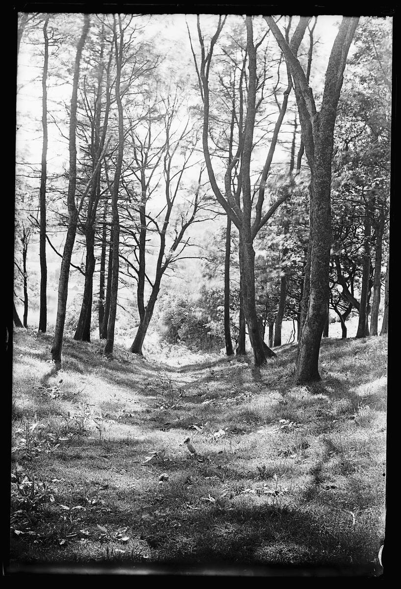 Alfred Watkin's photograph of some Devil's Acre