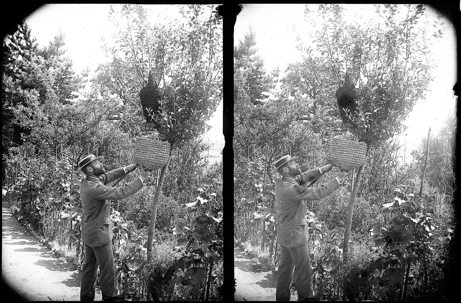 Alfred Watkins tending to some bees