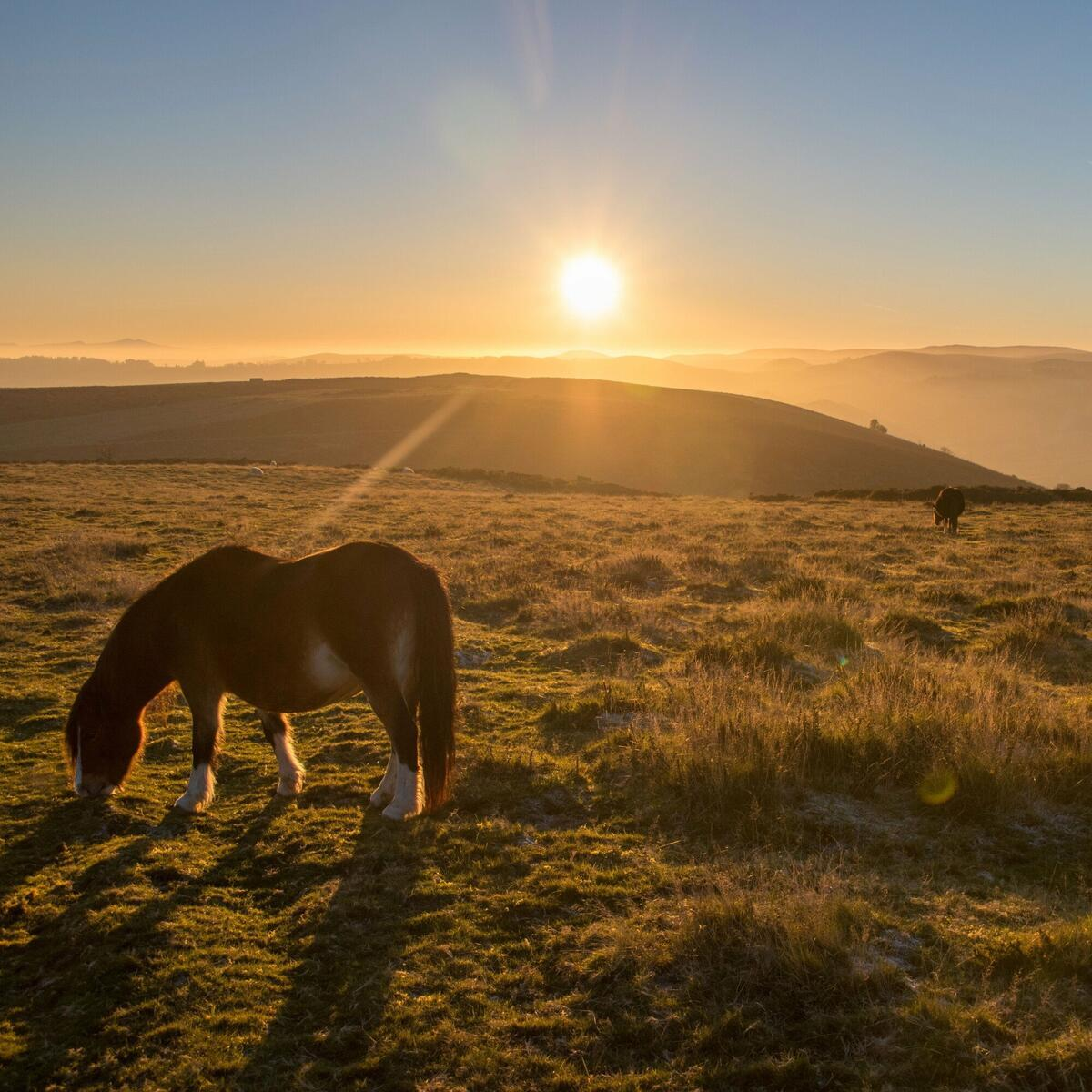 Another sun sets over Hergest ridge