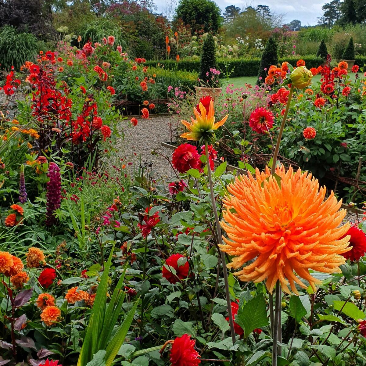 The herbaceous borders of hot colours