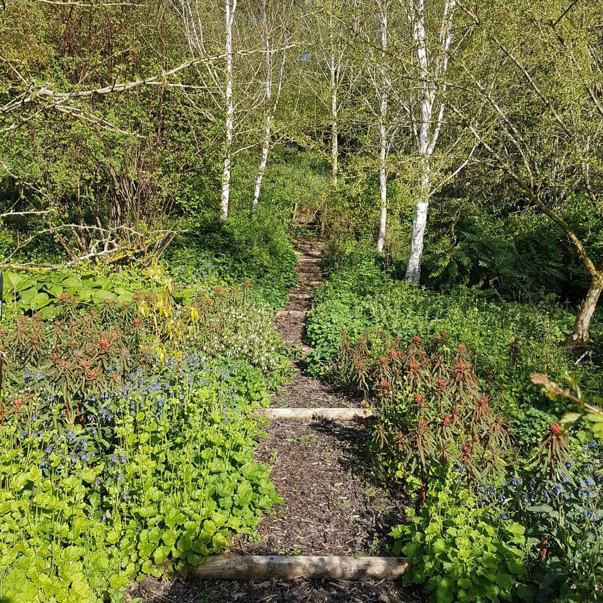 The woodland garden in spring
