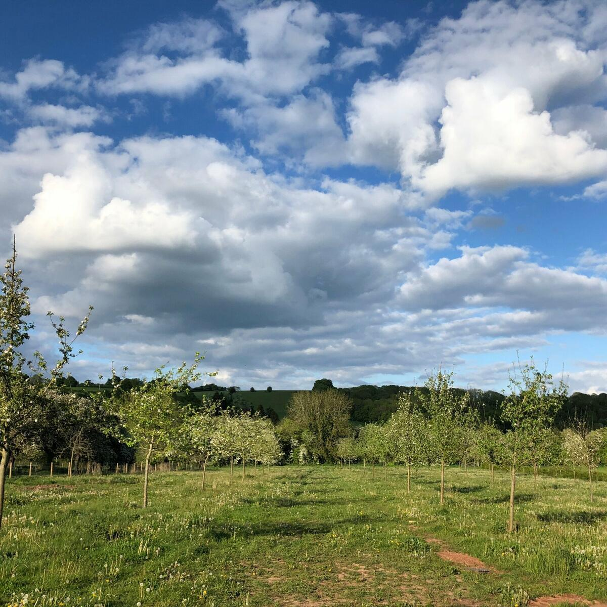 And breathe! 🍎 Take a wander through Brook House Farm heritage orchard, before stopping for a taste