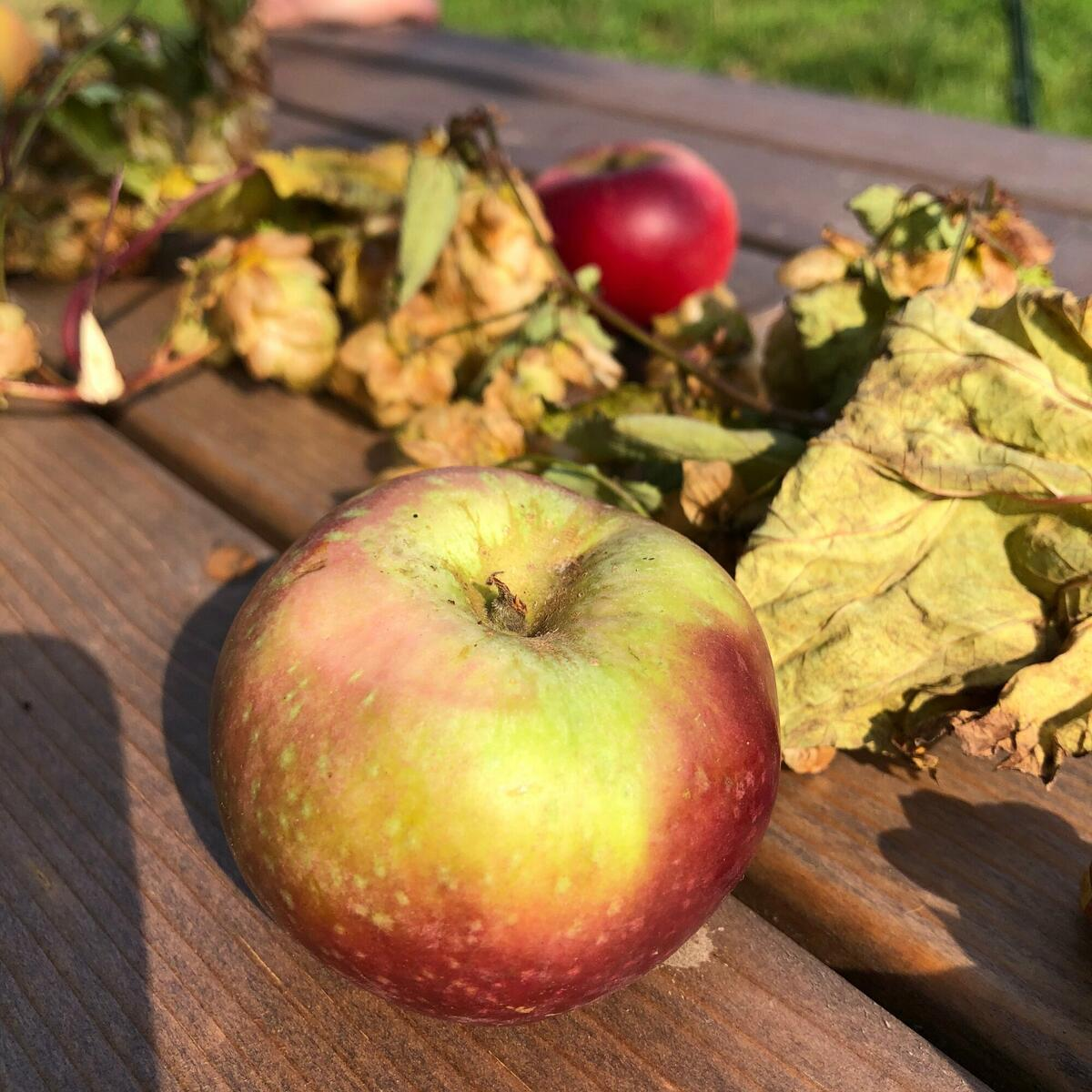 Beauty and no beasts 🍎 Visit in harvest to see the amazing fruit we get to work with and craft our ciders from