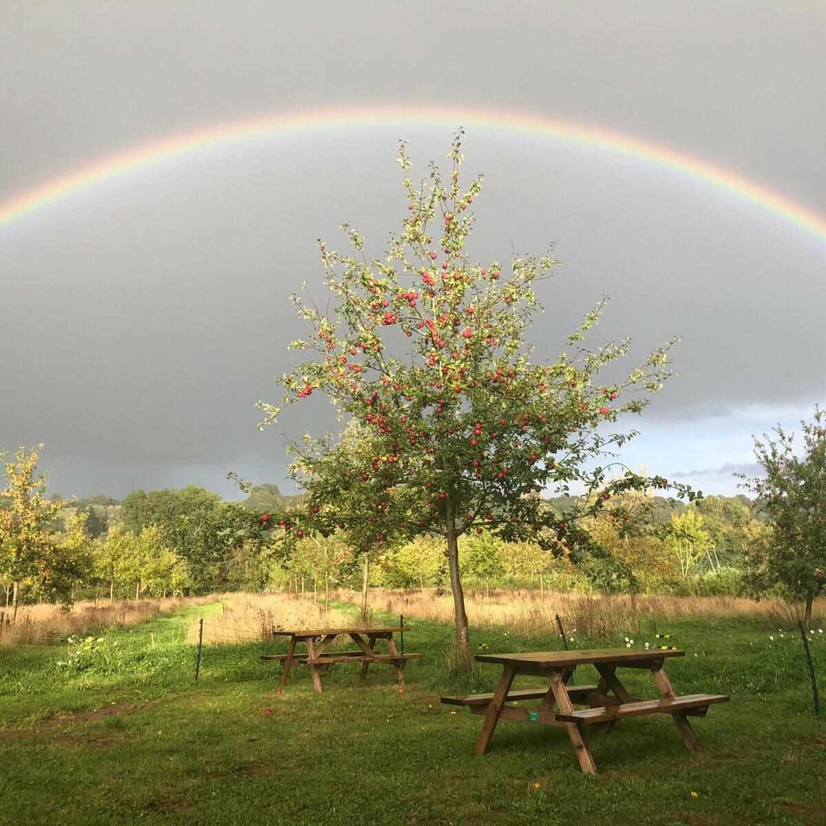 Somewhere… over the rainbow  🍎  The Tasting Room cider garden