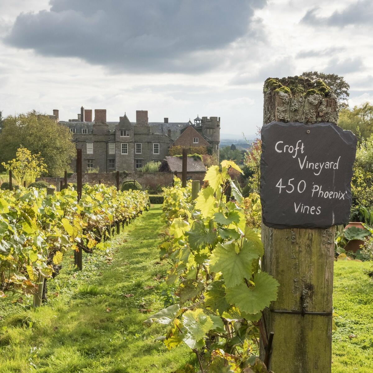 The vineyard at Croft