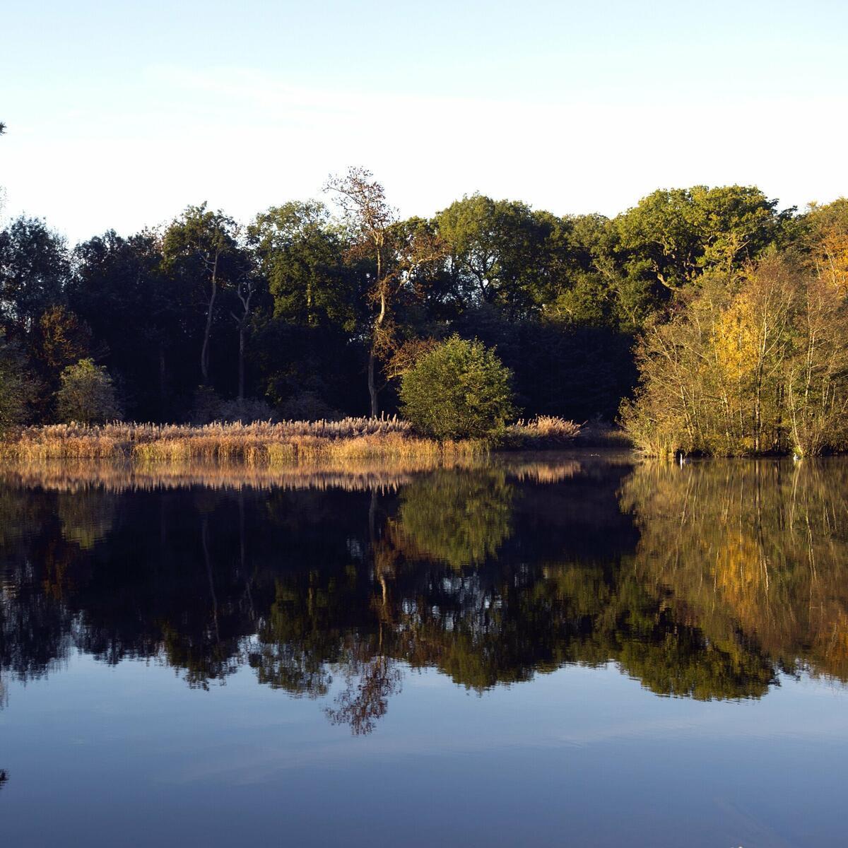 Berrington's lake in autumn
