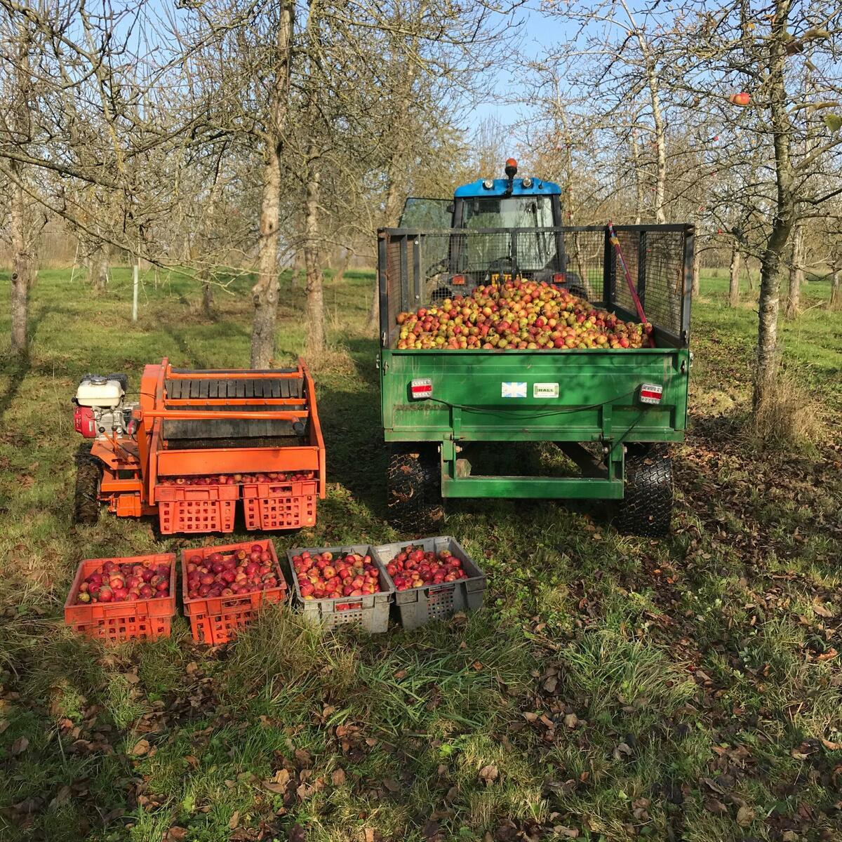 The last apple load from the 2020 harvest
