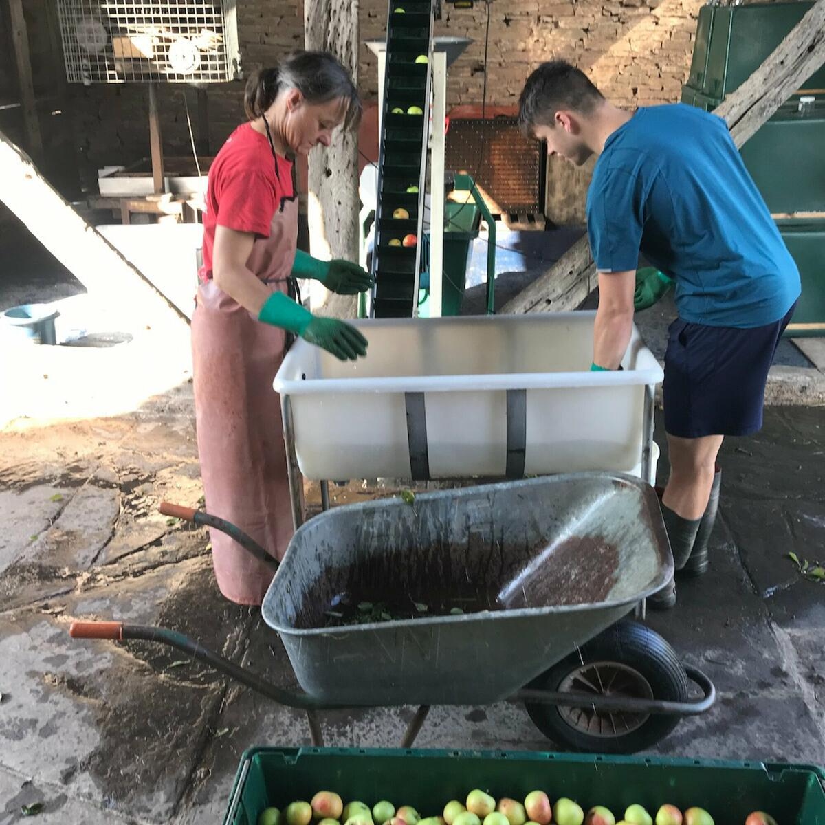 The apple sorting team