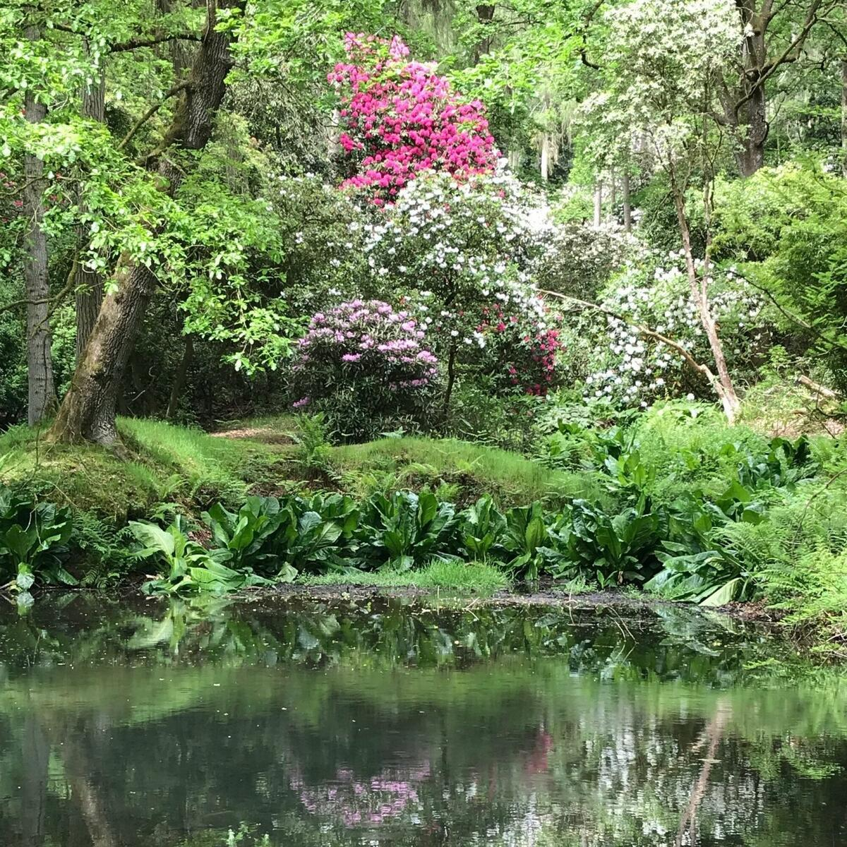 Reflections in Park Wood