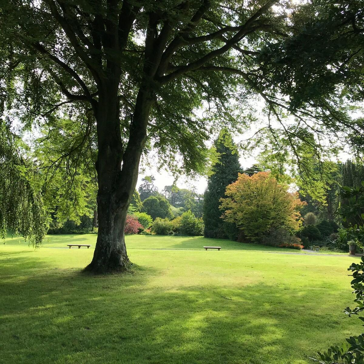 The main lawn, surrounded by specimen trees