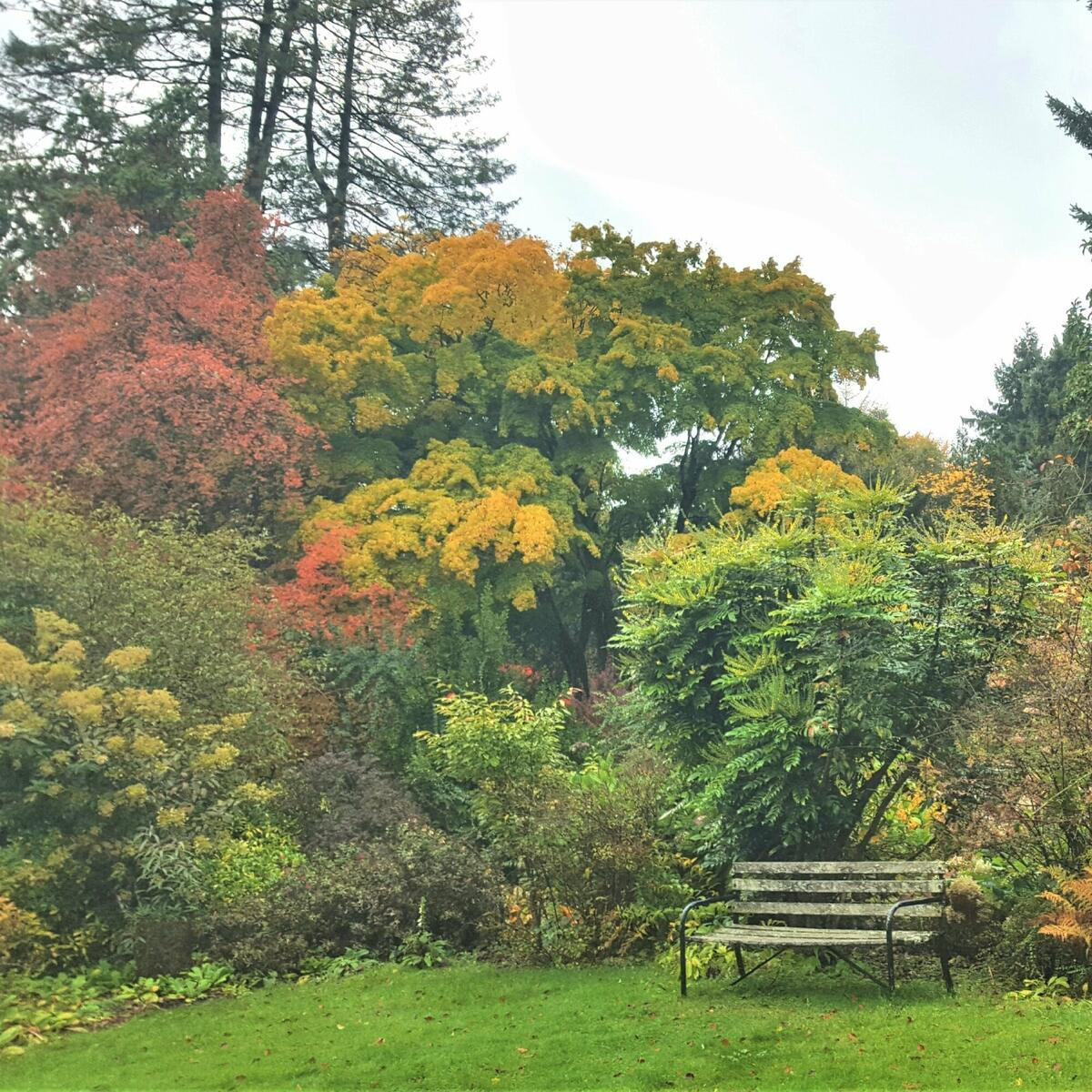 Some trees and shrubs in autumn