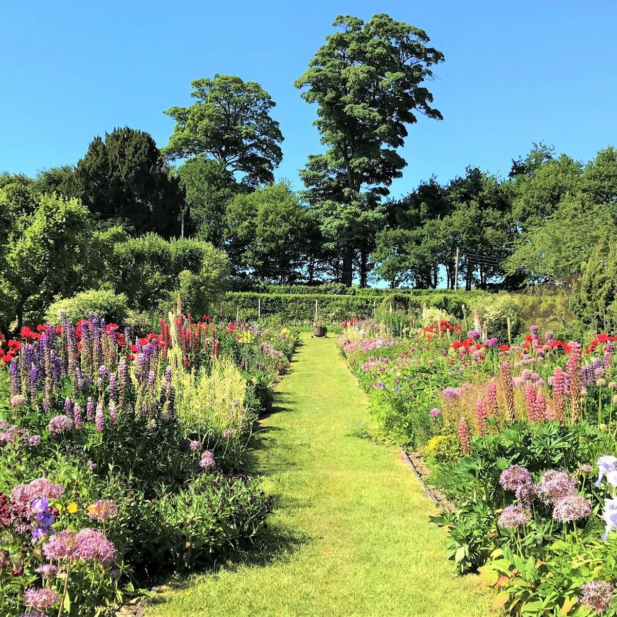 The double herbaceous border looking gorgeous