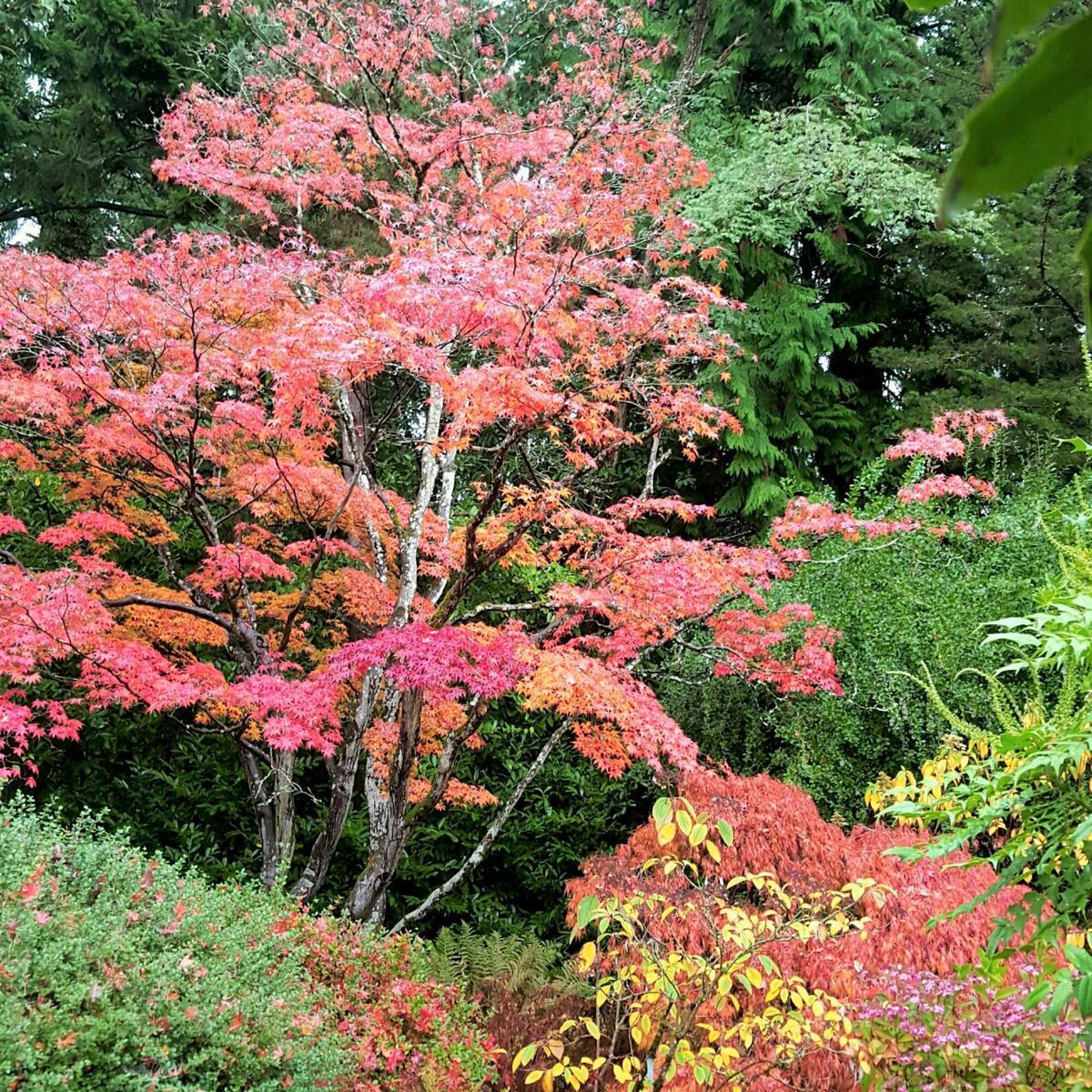 A blaze of colour!