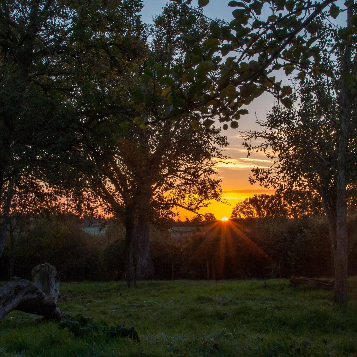 Harvest dawn at Gregg's Pit