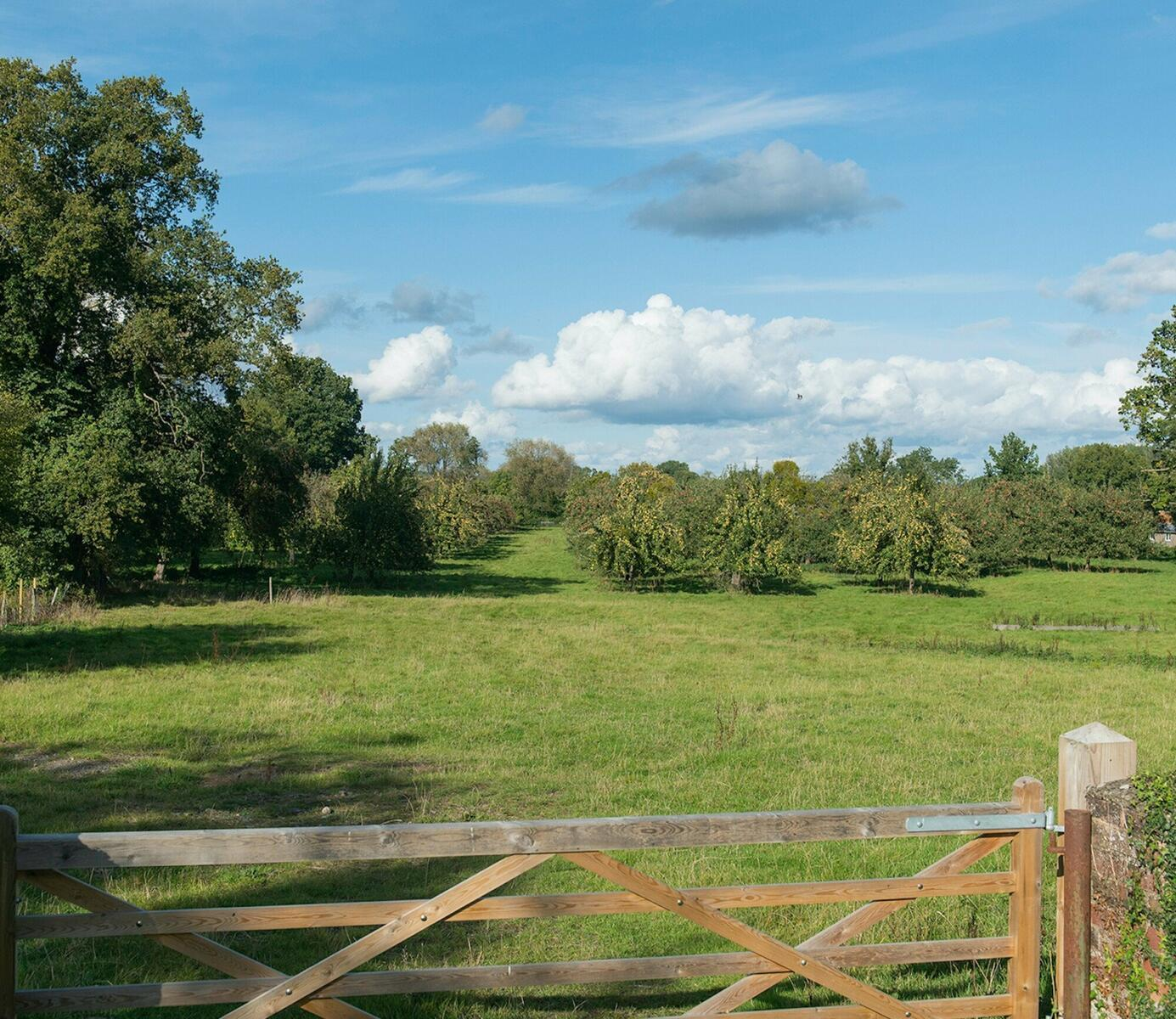 Orchard view from Hop Kiln