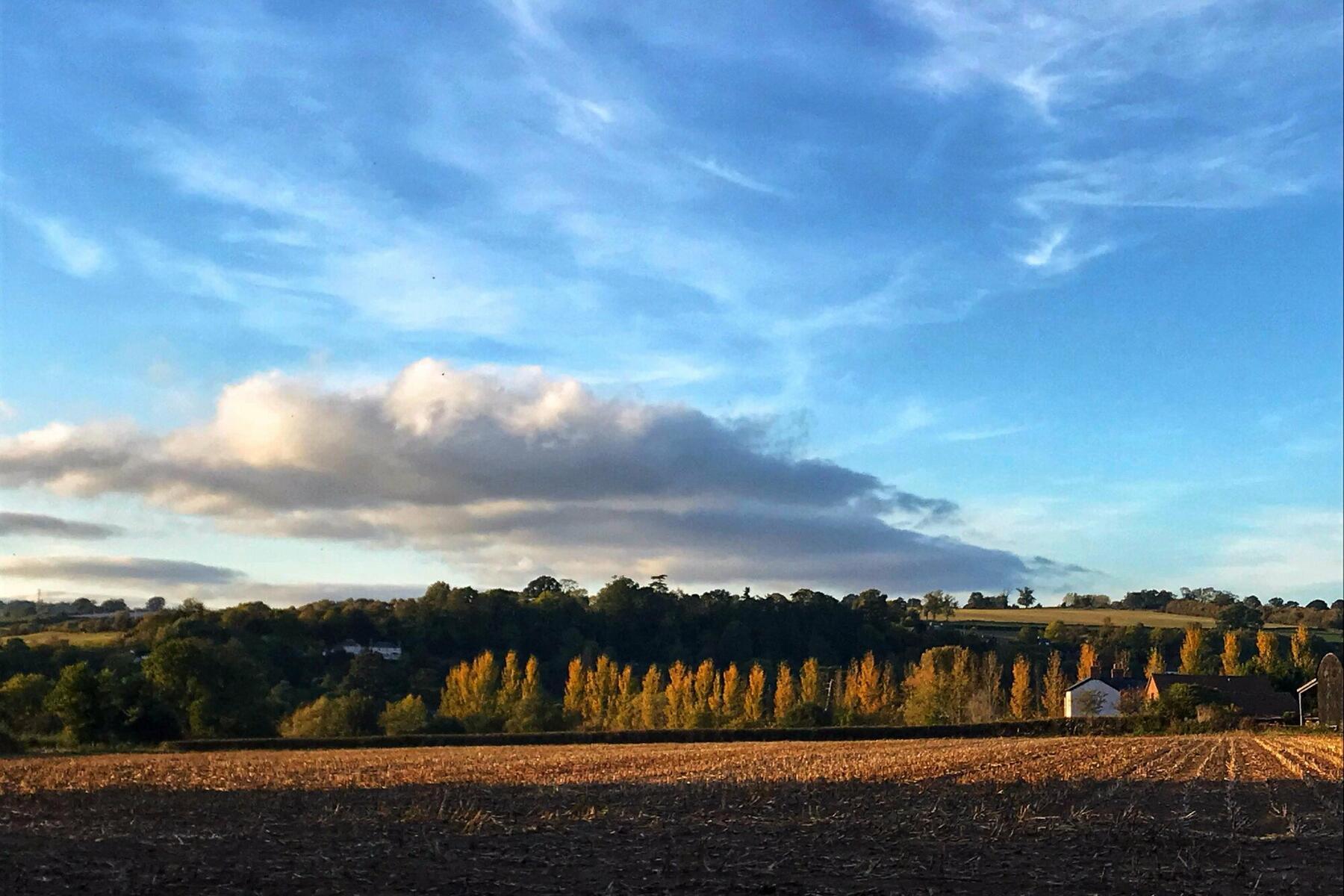 View of Ruxton