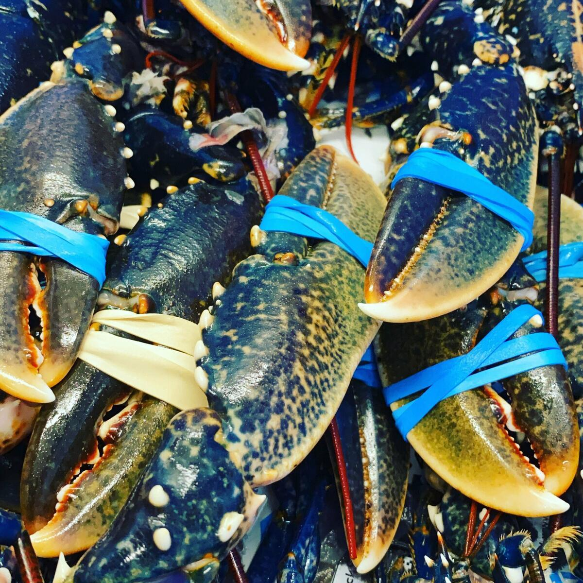 Fresh sea food delivered every day in the centre  of Hereford