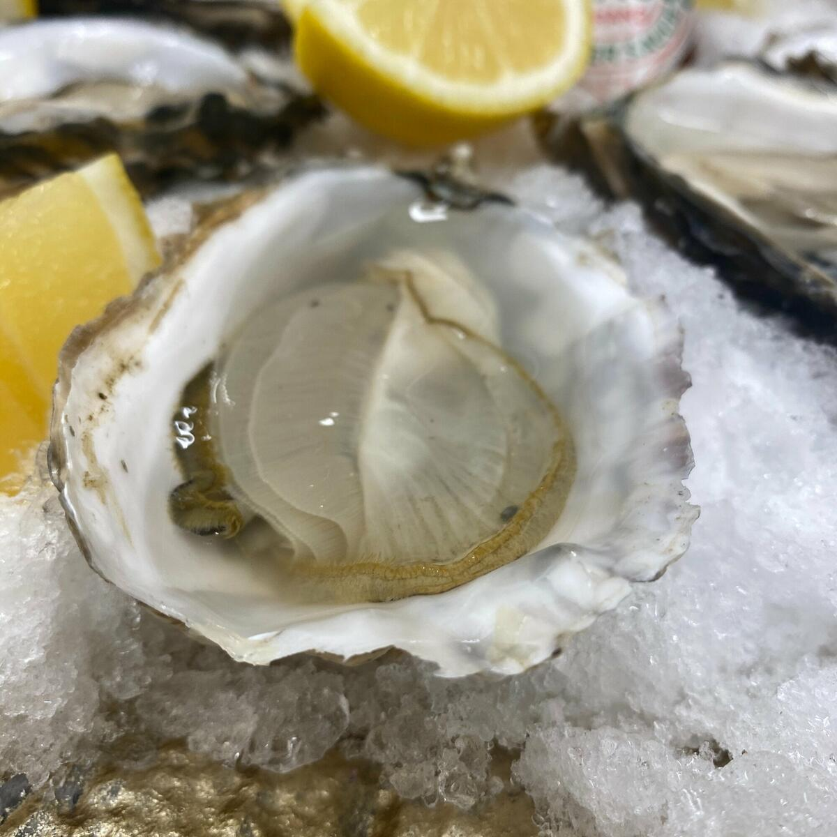 Porthilly Rock Oysters