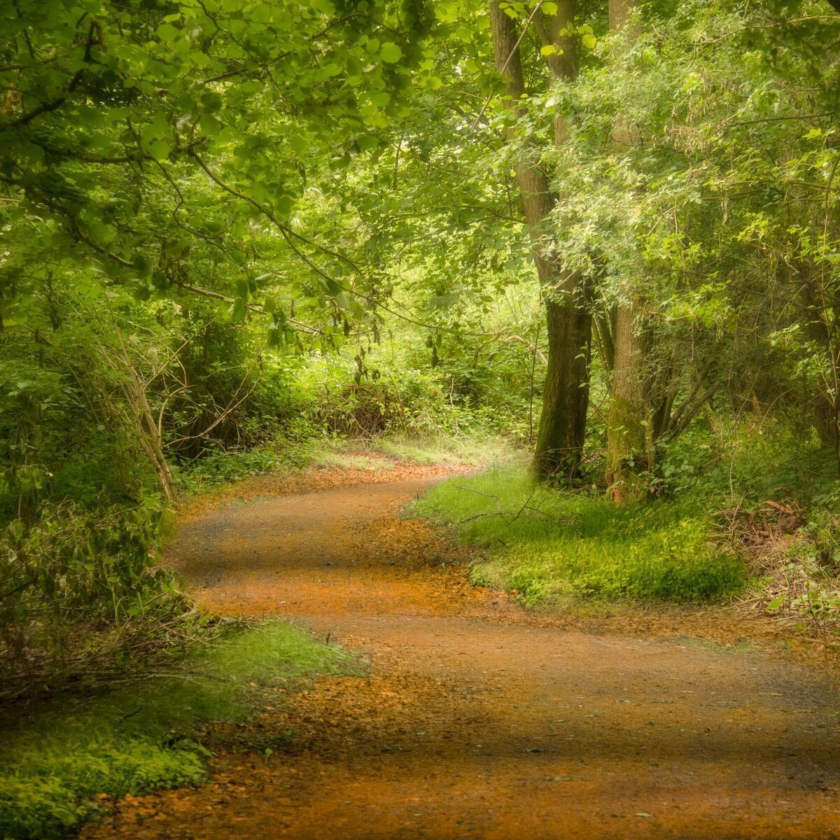Woodland walk and nature trail at Arrow Bank