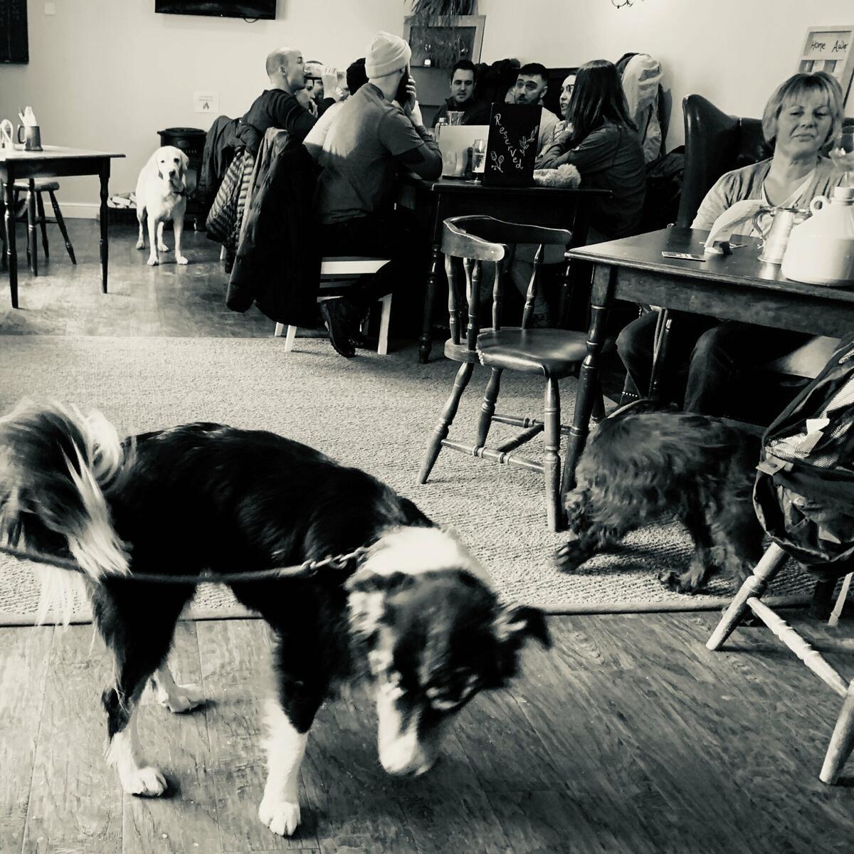 Dog friendly bar