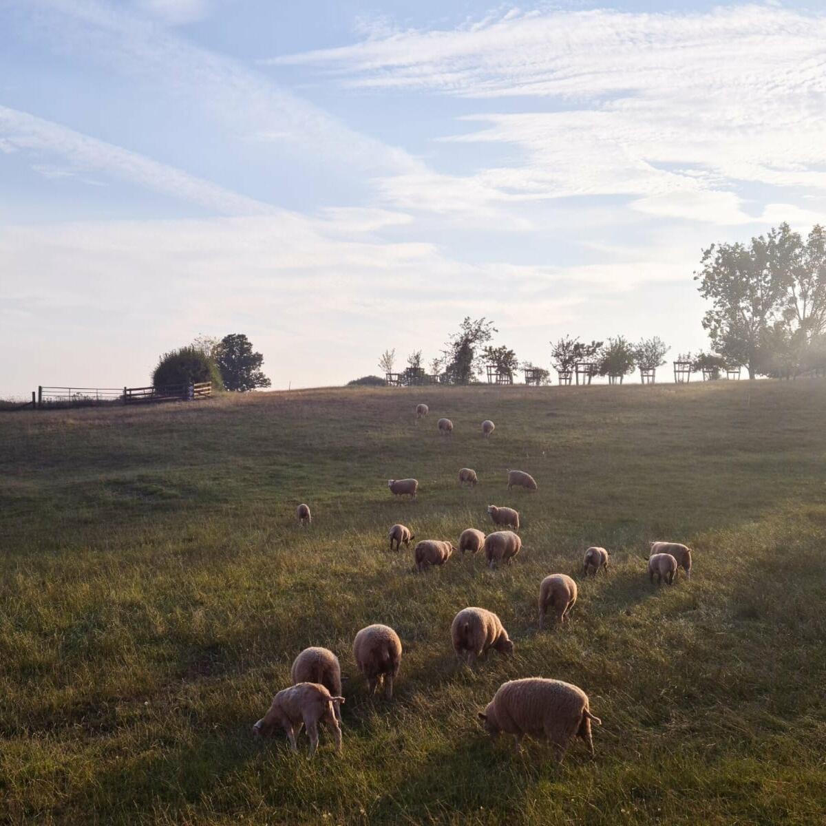 On a working farm