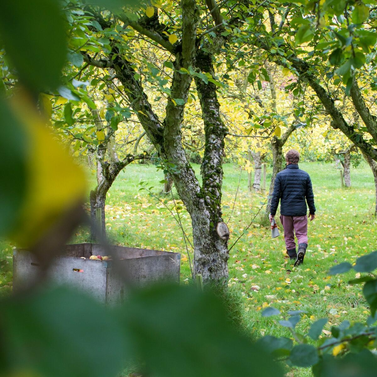 Walking through the Orchard