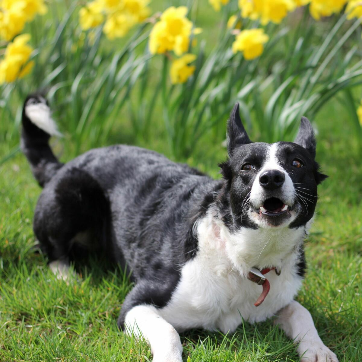Our bestselling cider, Birdbarker, is named after our relentless collie Summer. If you come, you're sure to hear her before you see her!