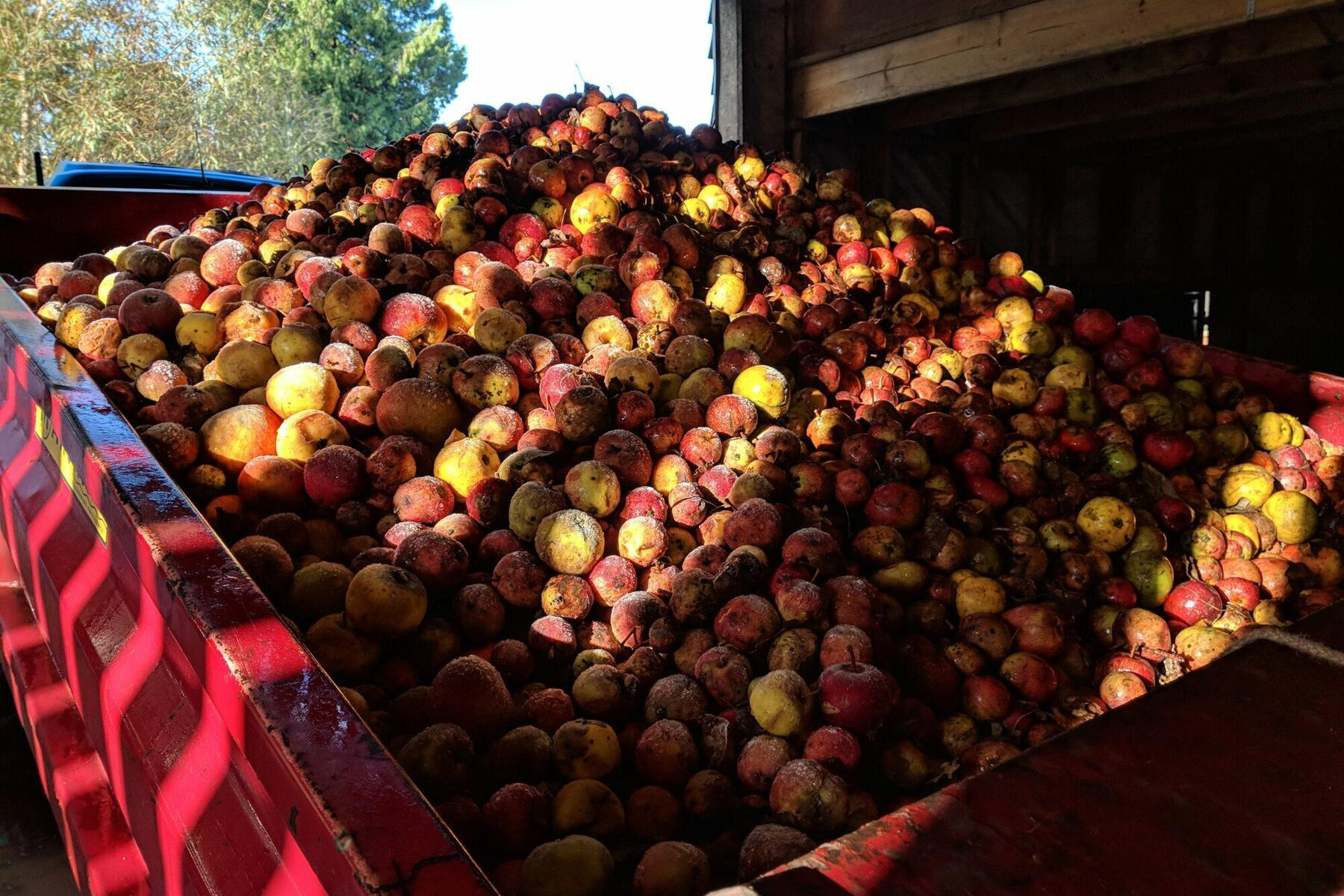 The apple season can last until late December! It gets very chilly!