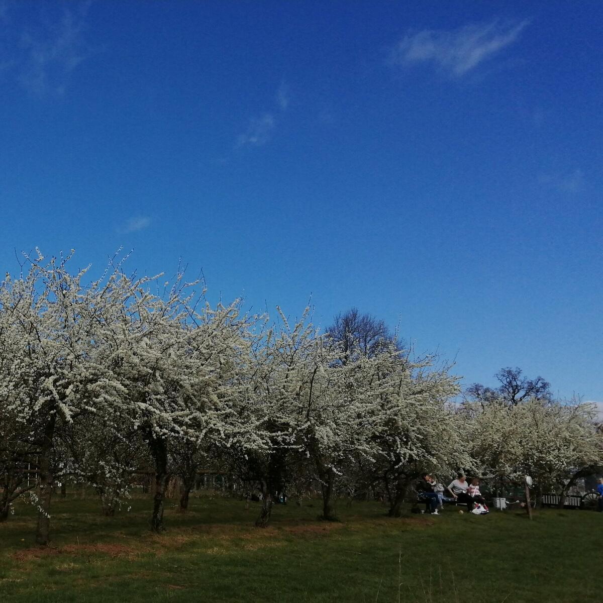 orchard picnic 2/4/2021