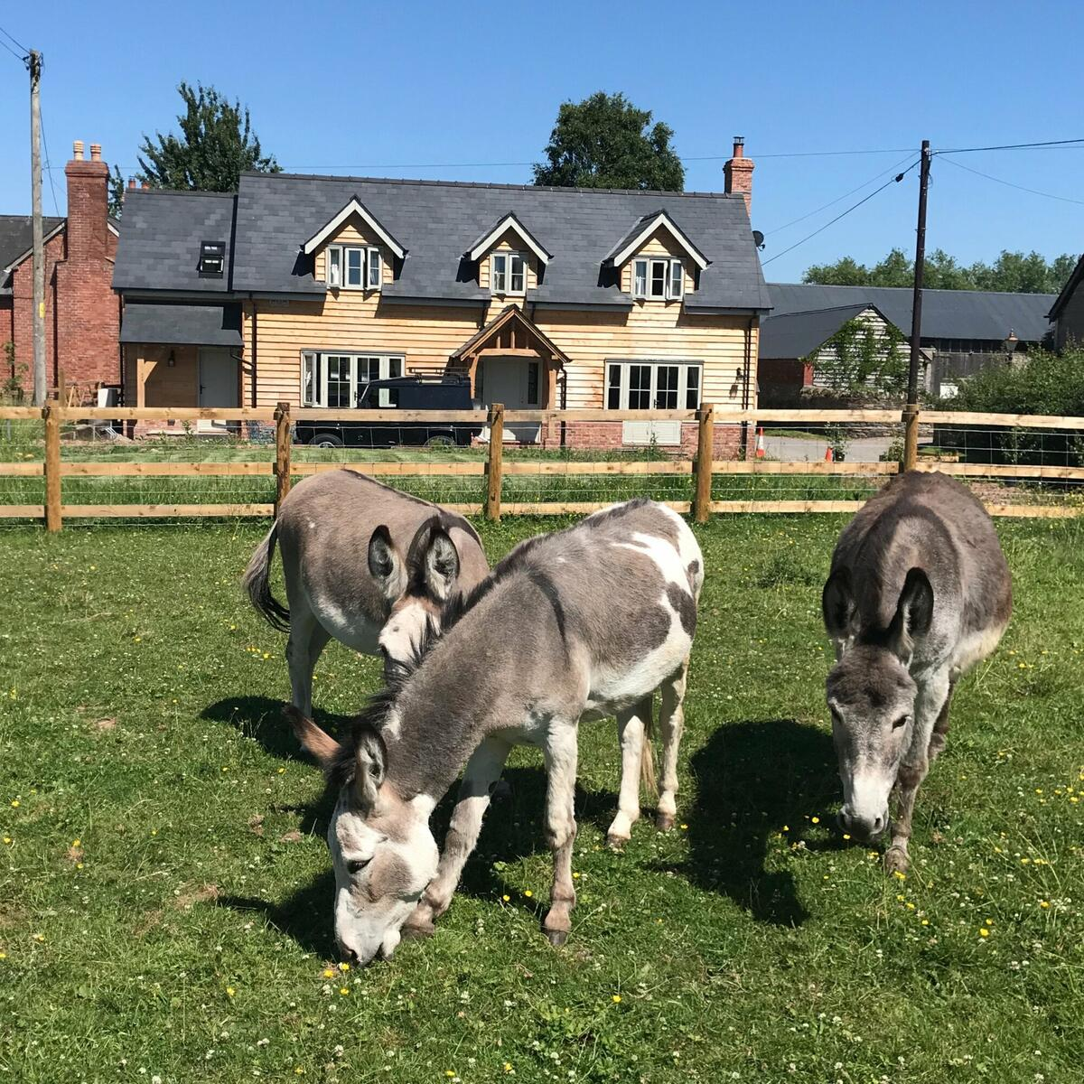 Donkeys and Horses are our neighbours