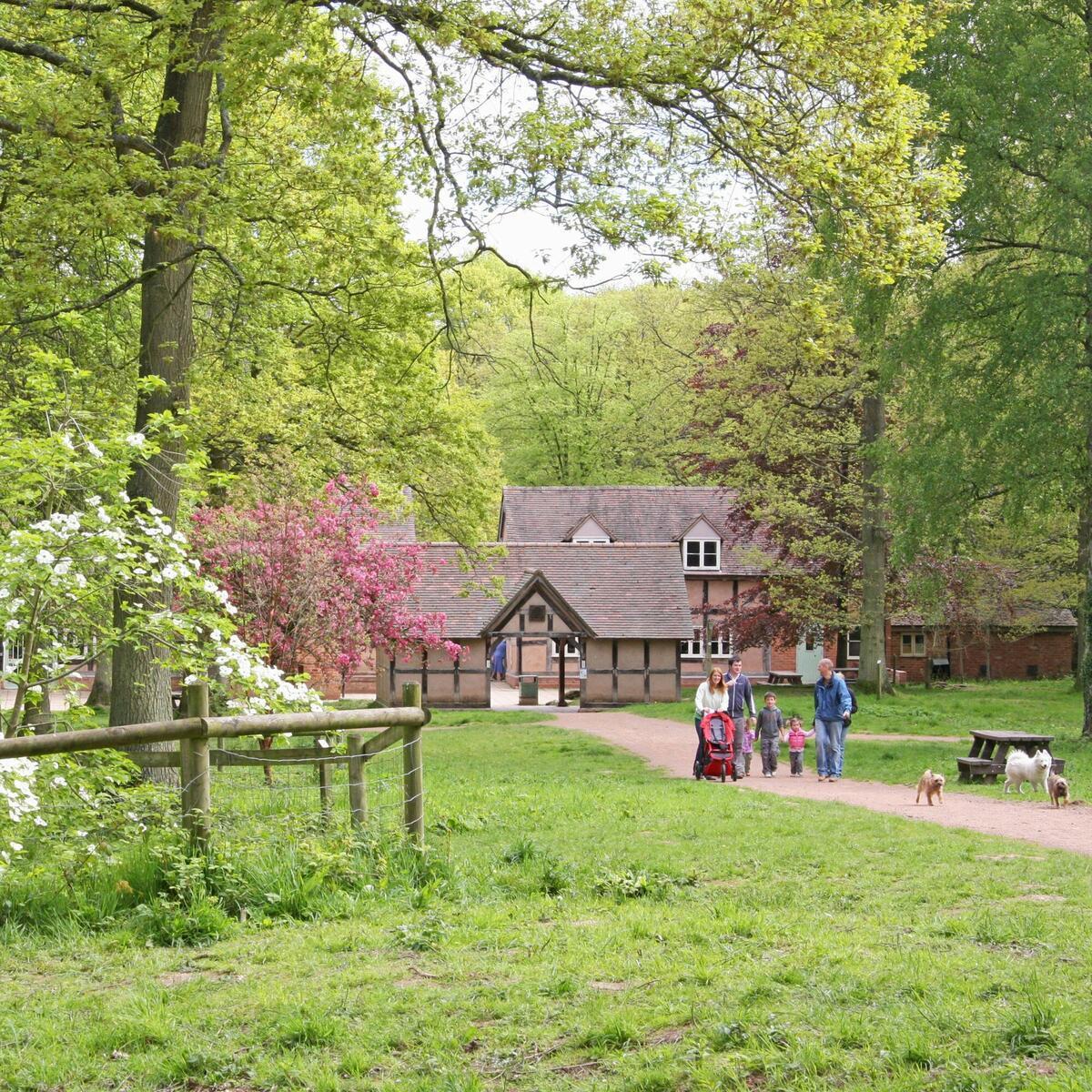 Lime Avenue, Queenswood Arboretum (c) Trevor Hulme