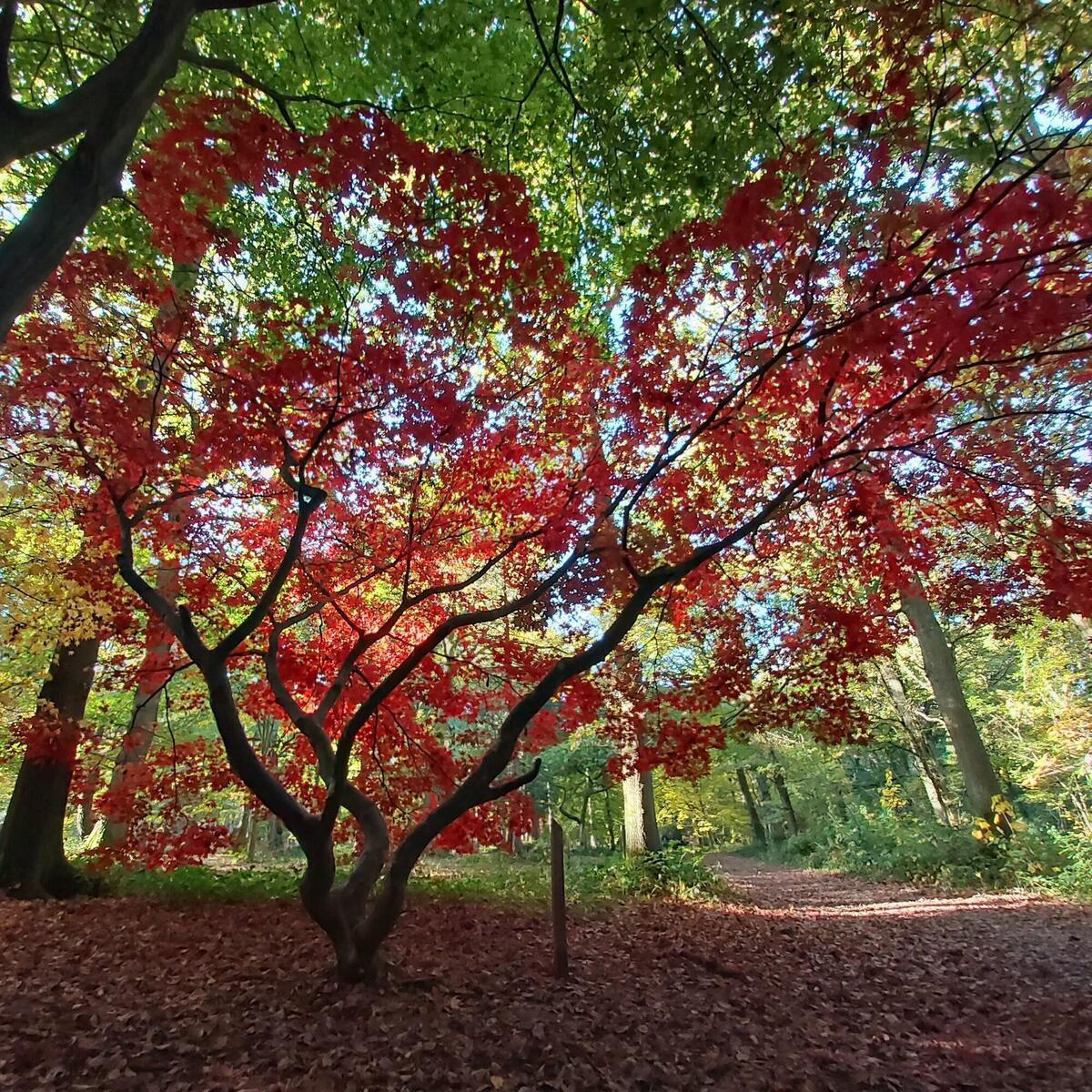 Autumn Colours, Queenswood Arboretum