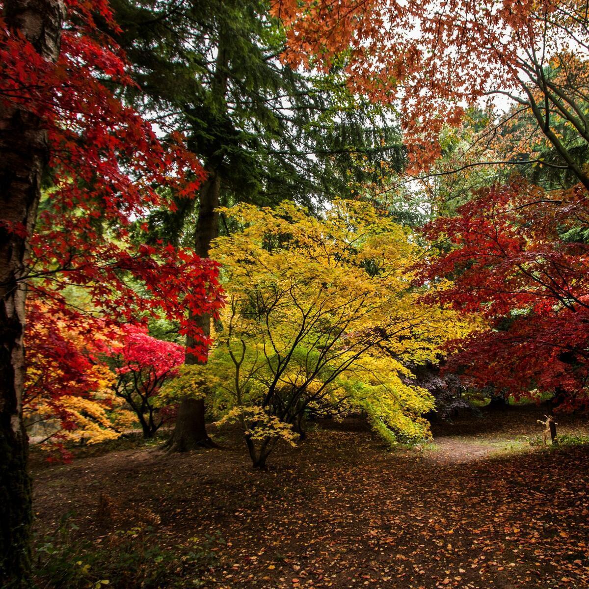 The Autumn Garden, Queenswood Arboretum (c) Natalie Jolley