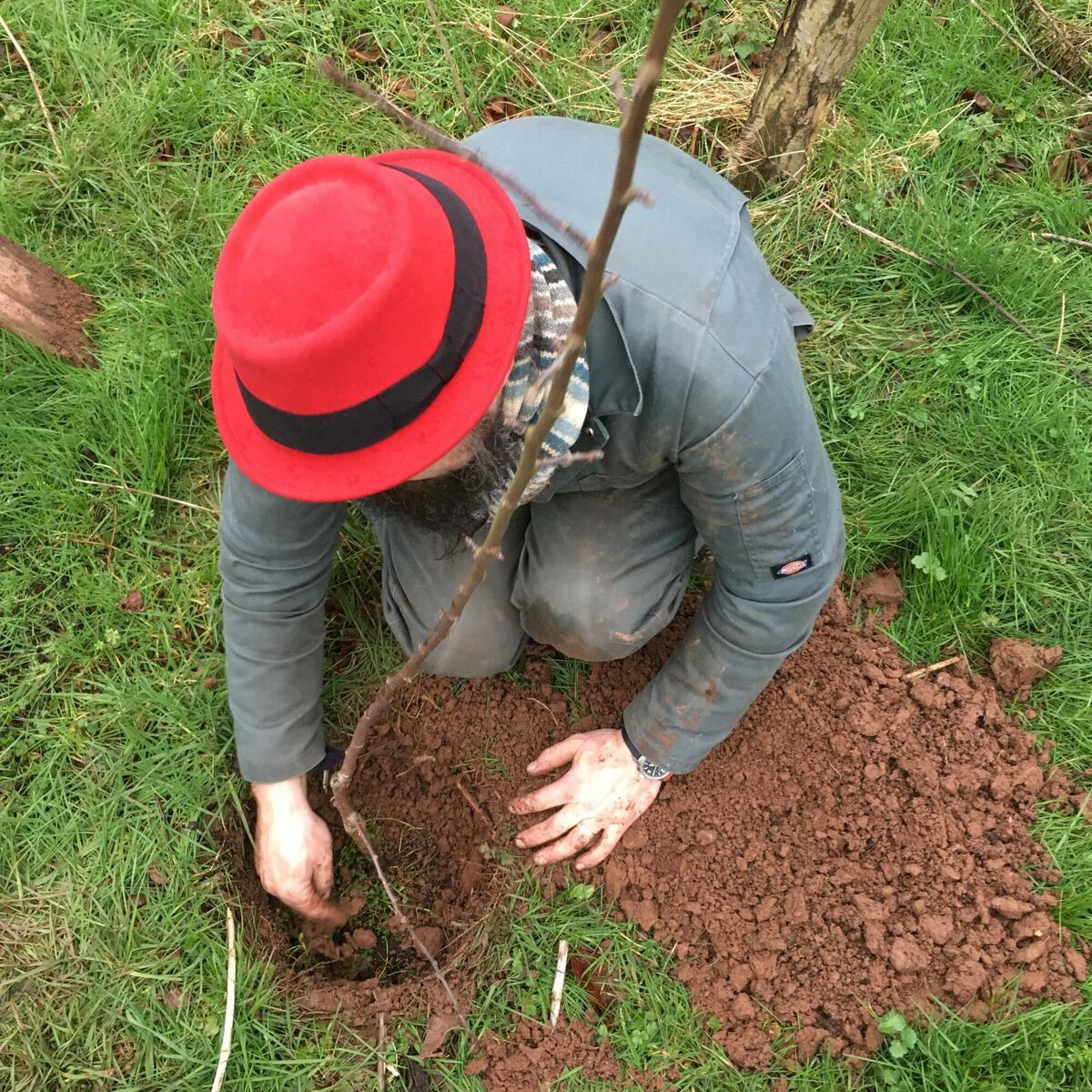 Tree planting in Artistraw Orchard
