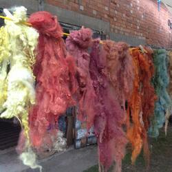 plant dyed wool